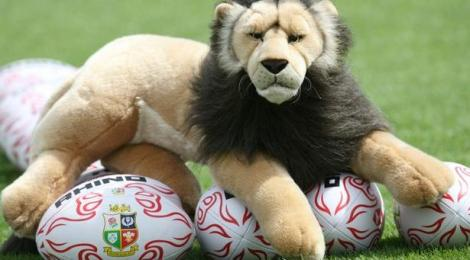 lions-lion-3861020